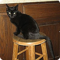 Adopt A Pet :: BELLA & MIA - 2013 - Hamilton, NJ