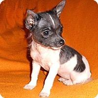 Adopt A Pet :: Lindy Lou - Mooy, AL