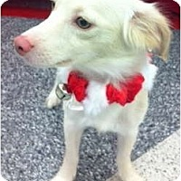 Adopt A Pet :: Brandi - Oceanside, CA