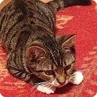 Adopt A Pet :: Fonzarelli - Hunlock Creek, PA