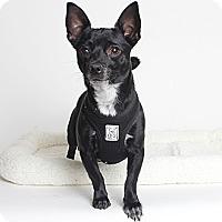 Adopt A Pet :: Wilson - Oakland, CA