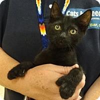 Adopt A Pet :: DYLAN - Diamond Bar, CA