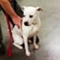 Adopt A Pet :: Electra - Midlothian, VA