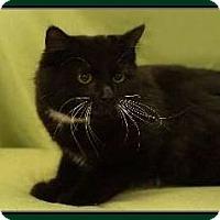 Adopt A Pet :: Eylese - Hampton, VA