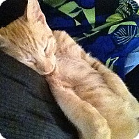 Adopt A Pet :: Logan - Lenhartsville, PA
