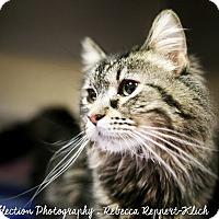 Adopt A Pet :: Violet - Appleton, WI