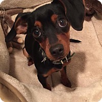 Adopt A Pet :: Arie - Livonia, MI