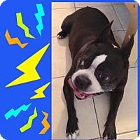Adopt A Pet :: Hubba Bubba FL - various cities, FL