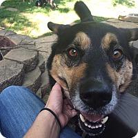 Adopt A Pet :: Puddy - Marietta, GA