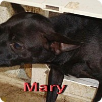 Adopt A Pet :: Mary - Coleman, TX