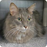 Adopt A Pet :: Buddy - Brockton, MA