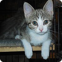 Adopt A Pet :: Skye - Whiting, IN
