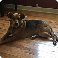 Adopt A Pet :: Nevaeh - Hagerstown, MD