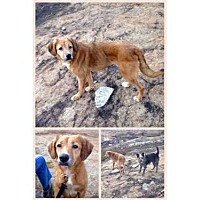 Adopt A Pet :: TWIGGY - Atlanta, GA