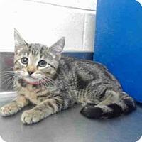 Adopt A Pet :: A355093 - Orlando, FL