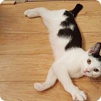 Adopt A Pet :: Ben - Stafford, VA