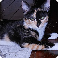 Adopt A Pet :: Zena - Darby, PA