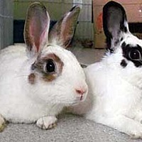 Adopt A Pet :: Raindrop - Tustin, CA