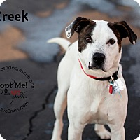 Adopt A Pet :: Creek - La Crosse, WI