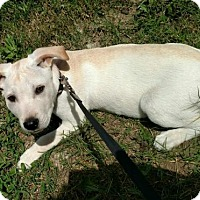 Adopt A Pet :: Baxter - Willingboro, NJ