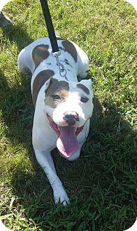 Terrier (Unknown Type, Medium) Mix Dog for adoption in Richmond, Virginia - Tater
