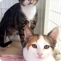 Adopt A Pet :: Salem - Key Largo, FL