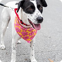 Adopt A Pet :: Nikki - Jacksonville, NC