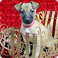 Adopt A Pet :: BOINGO - Westminster, CO