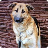 Adopt A Pet :: RUDOLPH.VON VALENTINO - Los Angeles, CA