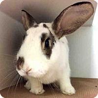 Adopt A Pet :: ALFRED - Brooklyn, NY