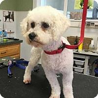 Adopt A Pet :: Joy - Coopersburg, PA