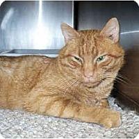 Adopt A Pet :: Tommy Boy - Colmar, PA