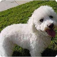 Adopt A Pet :: Oscar - La Costa, CA