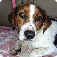 Adopt A Pet :: Woody - Alamosa, CO