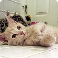 Adopt A Pet :: Quinn - Arlington, VA