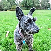 Adopt A Pet :: HEIDI - Kingston, WA