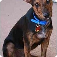 Adopt A Pet :: Fagin - Gilbert, AZ