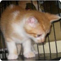 Adopt A Pet :: Monkey - Dallas, TX