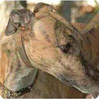 Adopt A Pet :: Square - Rancho Santa Margarita, CA