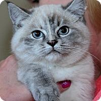 Adopt A Pet :: Noel - Davis, CA
