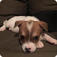 Adopt A Pet :: Vision - Austin, TX