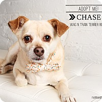 Adopt A Pet :: Chase - Omaha, NE