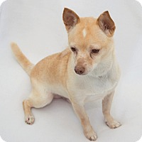 Adopt A Pet :: Cracker Jack - Cumberland, MD
