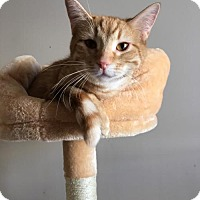 Adopt A Pet :: Poseidon - Bloomington, IL