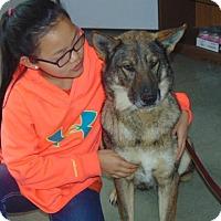 Adopt A Pet :: Madea - Portland, ME