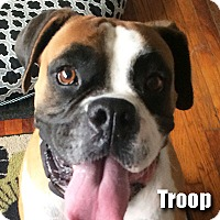 Adopt A Pet :: Troop - Encino, CA