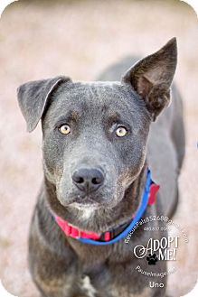 Retriever (Unknown Type) Mix Dog for adoption in Fountain Hills, Arizona - UNO