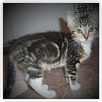 Adopt A Pet :: PAISLEY - Medford, WI