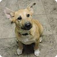 Adopt A Pet :: Precious - Cottonport, LA