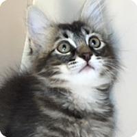 Adopt A Pet :: Starsky - Mesa, AZ